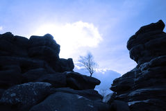 Tree in rocks. Silhouette of tree growing amongst rocks Stock Photography