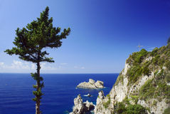 Tree and rocks on the cliff coast Stock Images