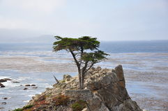Tree in the rocks Royalty Free Stock Photos