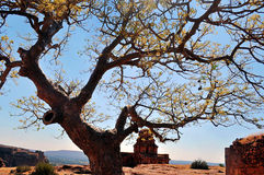 Tree on rocks Royalty Free Stock Photography