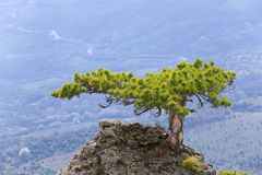Tree on rocks top Royalty Free Stock Photography