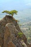 Tree on rocks top Royalty Free Stock Photo