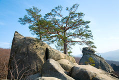 Tree on rocks top Royalty Free Stock Photo
