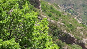 A tree on a rocky background. Background view of a tree swinging on the wind on a rocky background with copyspace stock video footage
