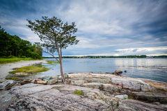 Tree and rocky coast at Odiorne Point State Park, in Rye, New Ha. Mpshire stock photography