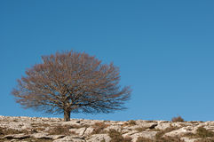 Tree in a rocky field with blue sky Stock Photo