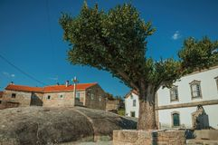 Tree on rocky ground in front of cross and old houses. Short leafy tree on rocky ground in front of stone cross and old houses, in a sunny day at Lageosa do royalty free stock image
