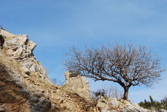 Tree on the rocky hill Stock Photography