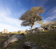 Tree on a rocky hill. Bingie. Nsw. Australia. Royalty Free Stock Photography