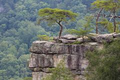Tree on a rocky ledge royalty free stock photography