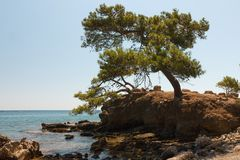 Tree on rocky seashore. Royalty Free Stock Photography