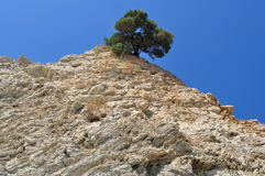 Tree on rocky shore Stock Photography