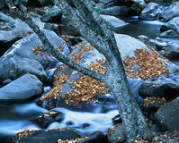 Tree And Rocky Stream. Great Smoky Mountains National Park, Tennessee Stock Photos