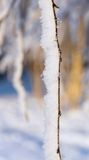 Tree rod with white brilliant snow and hoarfrost Royalty Free Stock Images