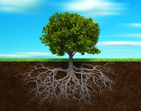 The tree and rood Royalty Free Stock Image