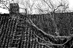 The tree on the roof. A large old tree perched on a tile roof Stock Photos