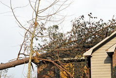 Tree on Roof. Pine tree on top of a house caused by a natural disaster Royalty Free Stock Images