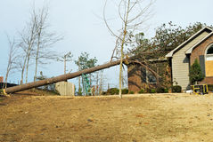 Tree on Roof. Pine tree on the roof of a tornado damaged house Stock Photo
