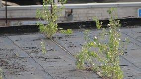 Tree roof wood old roofing. Roof repair stock video footage