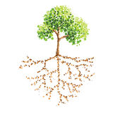 Tree and root. Dot painting tree and root Royalty Free Stock Image