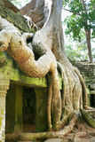 Tree root at Angkor Wat Stock Photography
