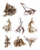 Tree  root. A bunch of tree  root on white background Royalty Free Stock Photos
