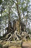 Tree root Castle. A tree root castle in the woods Royalty Free Stock Images