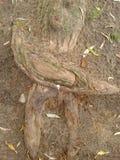 Tree root Stock Photos