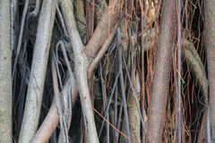 Tree root with a cross Royalty Free Stock Photography