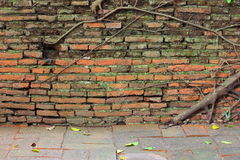 Tree root growth on the brick wall Stock Images
