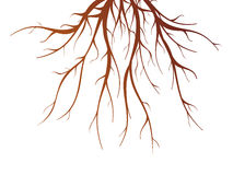 Tree Root  Illustration. Brown tree root on white background flat  vector illustration Royalty Free Stock Images