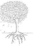 Tree and Root illustration hand drawn Royalty Free Stock Photo