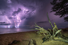 Tree root and lightning in the sea Stock Photography