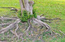 Tree root Stock Image