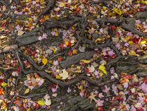 Tree Root Pattern and Leaves Stock Photos