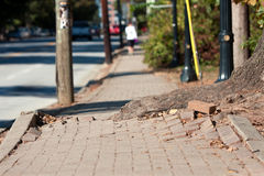 Tree Root Pushes Through Bricks Of Sidewalk In Urban Area Royalty Free Stock Images