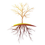 Tree With Root  Retro Cartoon Illustration Royalty Free Stock Images