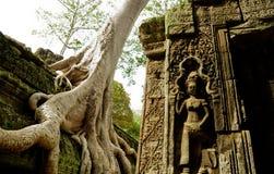 Tree root sit on a ruin ancient building. At Angkor Wat, Cambodia Stock Photos