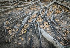 Tree root Stock Photos