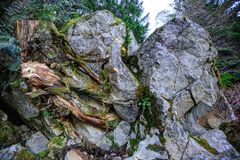 Tree rooting into the middle of a splitting rock Royalty Free Stock Photography