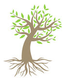 Tree with roots. Over white. vector illustration Royalty Free Stock Images