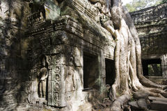 Tree roots Angkor Temple Ruins Royalty Free Stock Photos