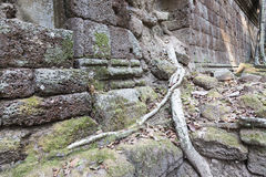 Tree roots in Angkor Thom Stock Photo