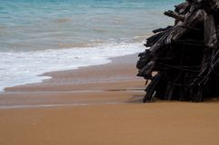 Tree roots on the beach Royalty Free Stock Photo
