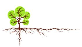 Tree with roots. Big green tree with roots Stock Image