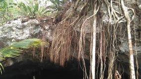 Tree roots in sacred cenote rivera maya. Tree roots in cenote stock photography