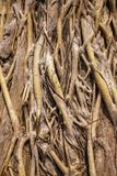 Tree roots close-up Stock Image