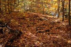 Tree Roots Covered with Orange fall Leaves. Tree roots leading up a hill covered with orange leaves seen during a walk in the woods on a sunny fall day stock photography