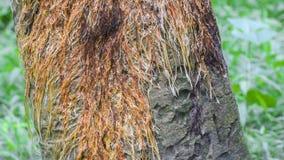 Tree roots footage, tilt effect stock video