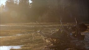 Tree roots and grass on mud flats with fog. Tree roots and fog along mud flats on Hood canal stock video